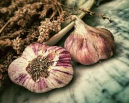 garlic-254x202