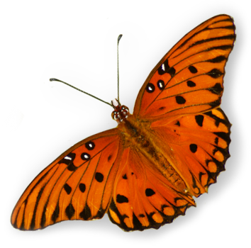 butterfly-only