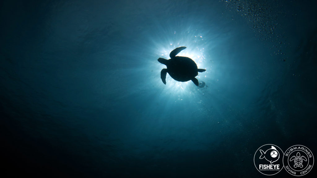 Fish eye Productions capture a beautiful silhouette of a turtle reaching the urface