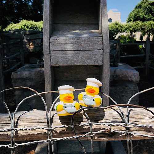 rubber duck pic 6