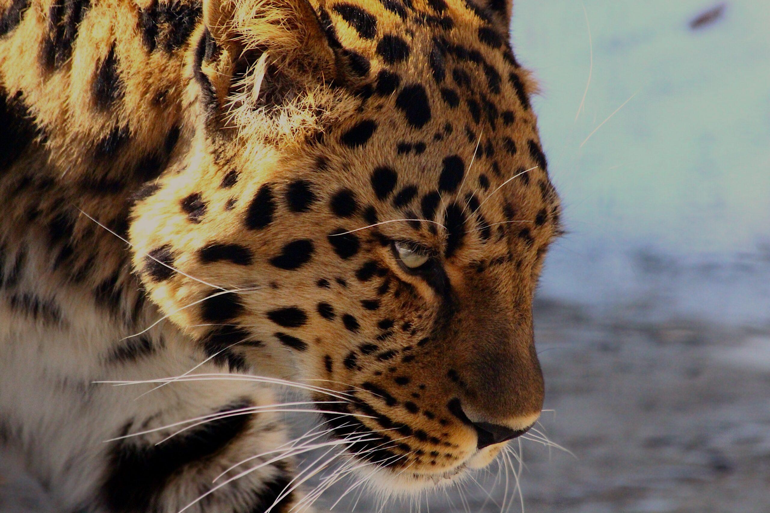 Can a Leopard Change its Spots?
