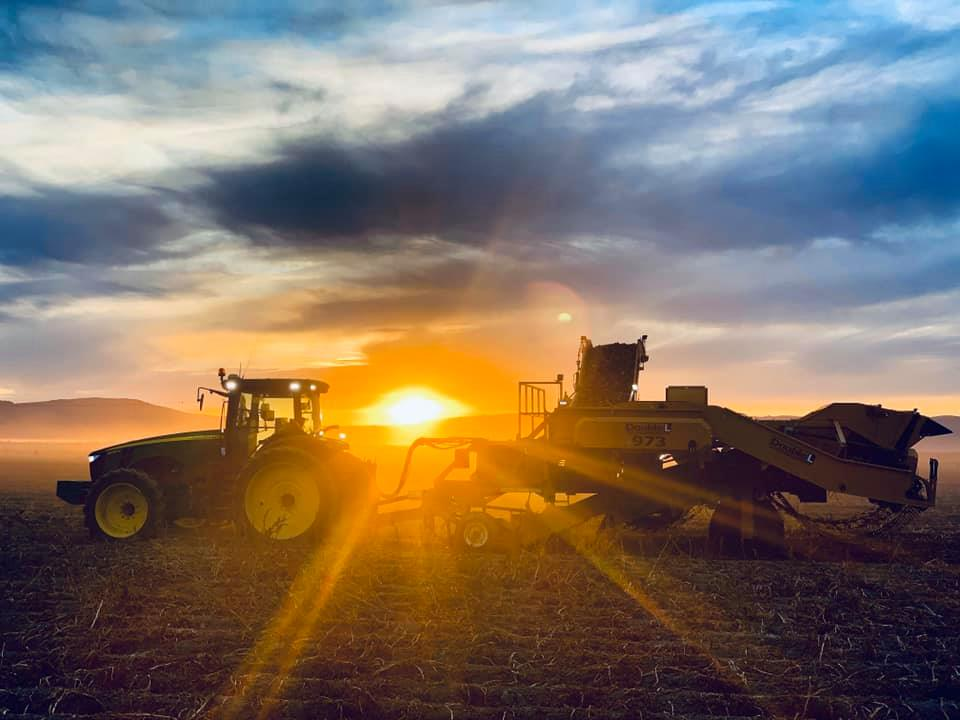 potato harvester at sunrise