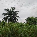 A woman who walks through the yam field