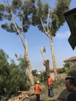 Paradise Landscaping & Tree Experts