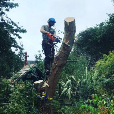 picture of luke cutting down a tree