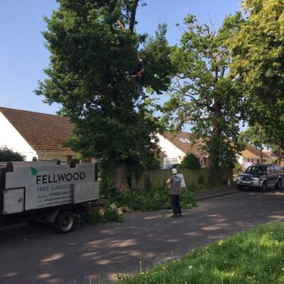 Tree Surgeon Hampshire