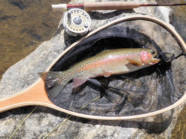 Beautiful Colors on This Big T Rainbow