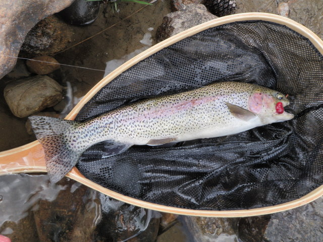 Nice Afternoon Rainbow Had Red Growth in Mouth