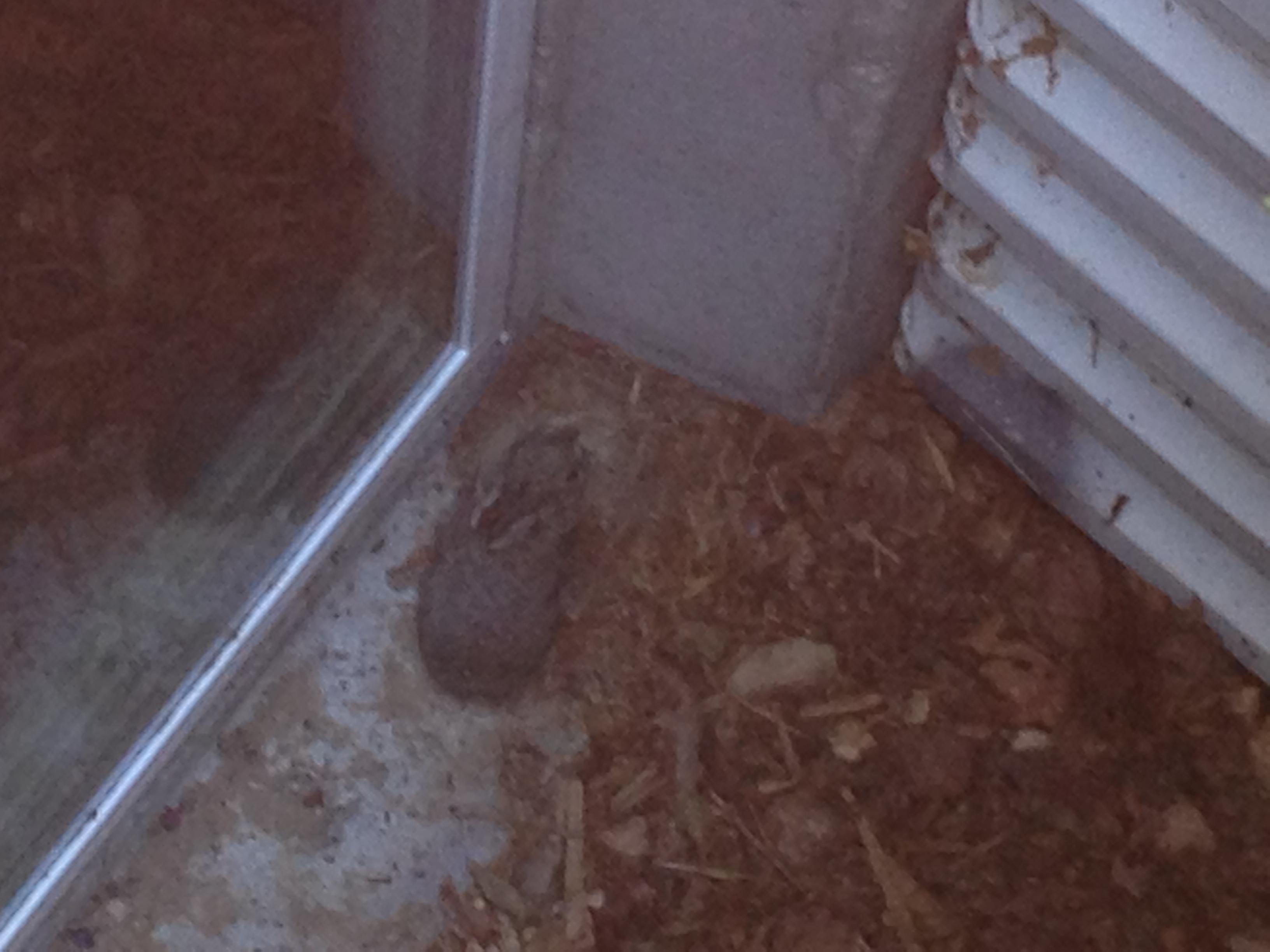 Bunny Still Trapped
