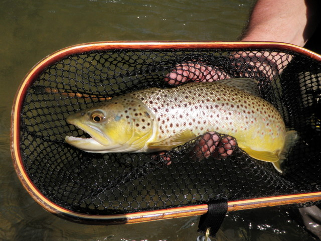Healthy Penns Creek Brown