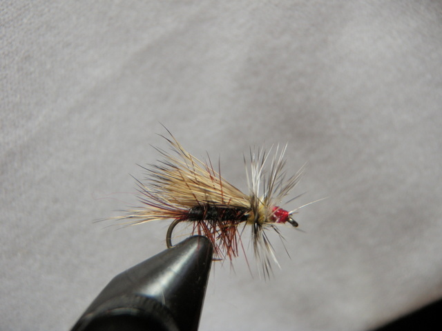 Size 14 Black Caddis Tied for Argentina