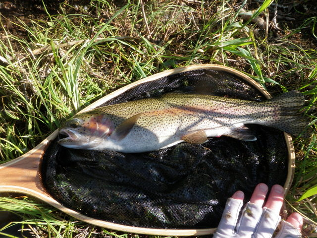 Impressive 15 Inch Rainbow from Eagle River