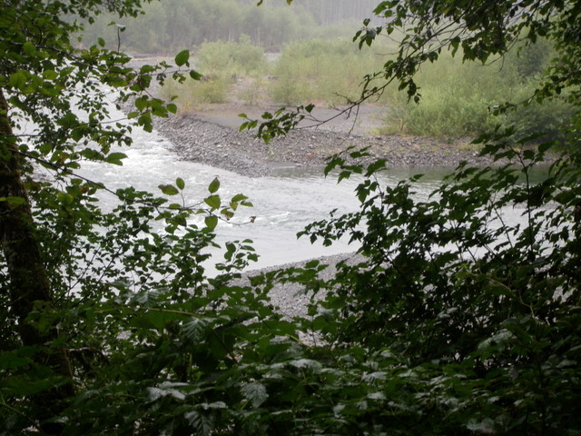 Confluence of East and North Branches of Quinault River