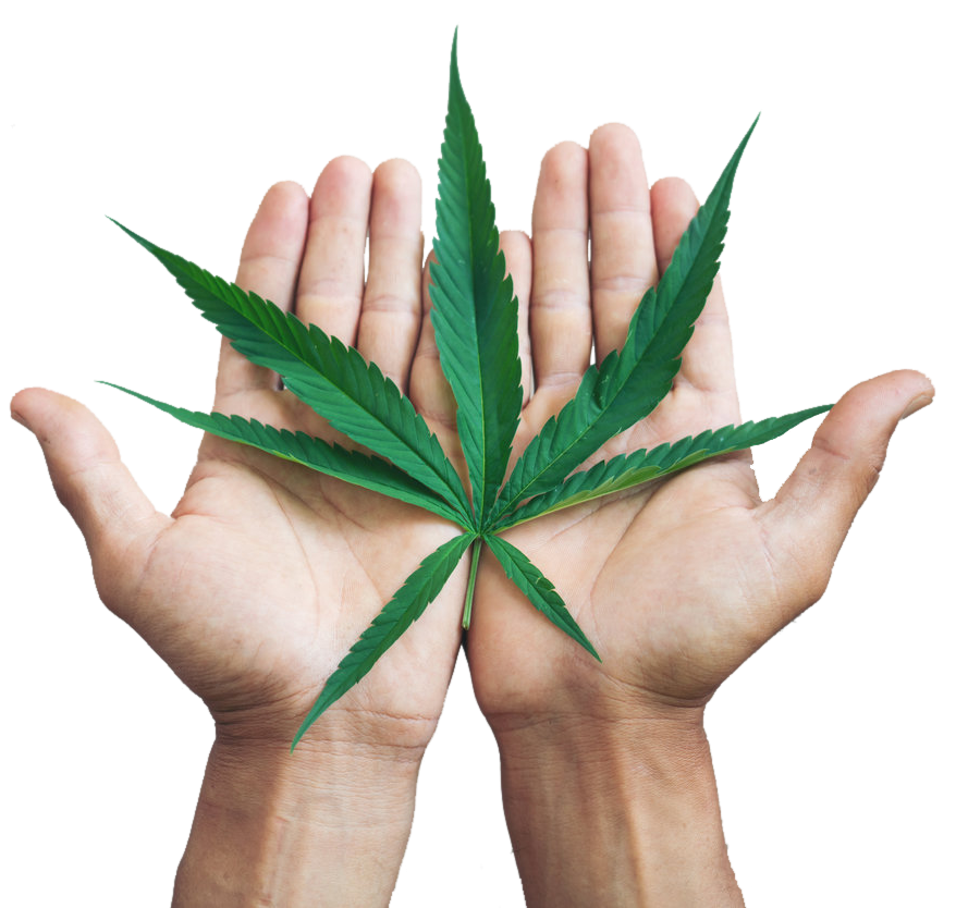 Halcyon Holdings Hemp Leaf in Hands