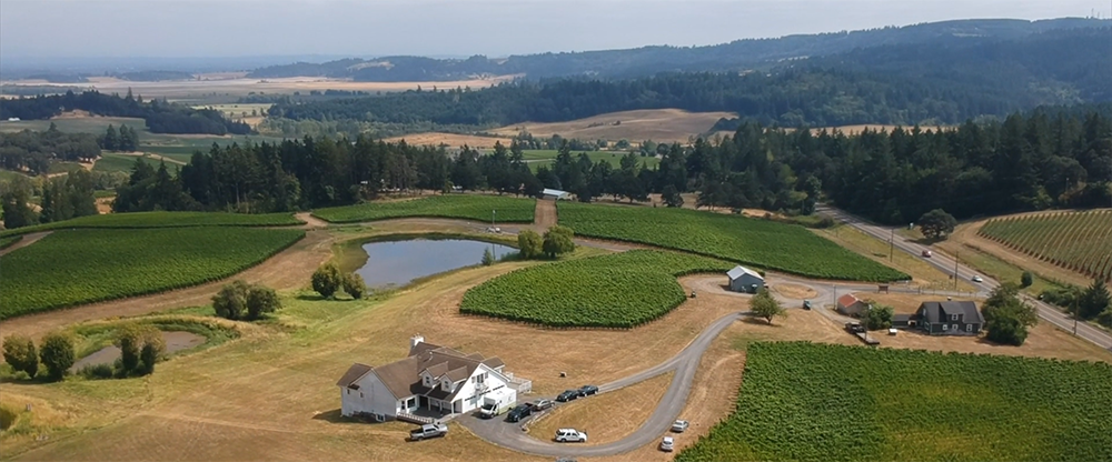A vineyard in Oregon's Willamette Valley seen from the air