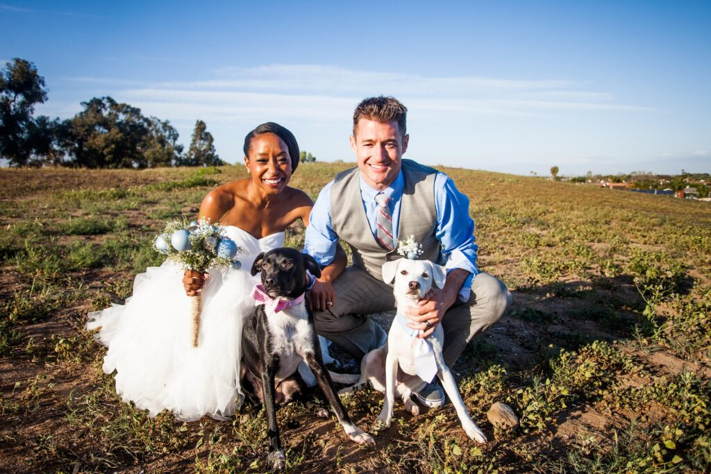 A couple with their dogs on wedding day