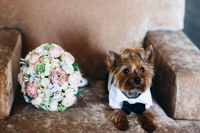 Dog on wedding day with pet sitter