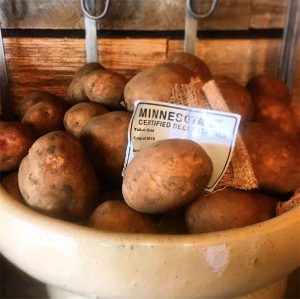 Seed-Potato-Planting-Guide-Cedarpark-Austin-TX