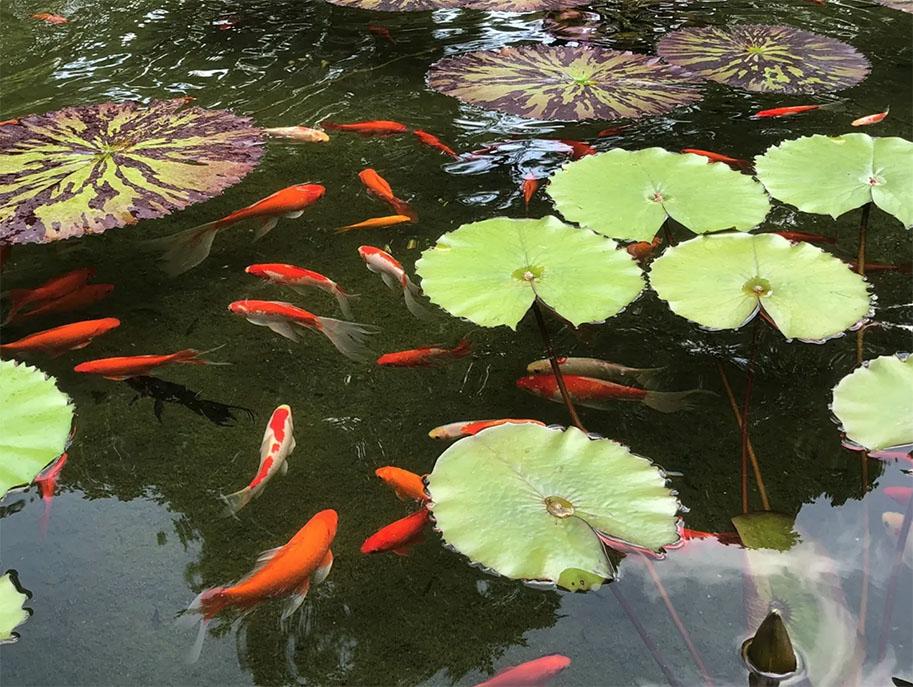 Summer-Time-Fish-Safety-Cedarpark-Austin-TX