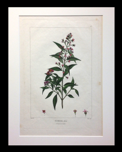 Turpin/Poiteau ca. 1860 Matted size 23 x 18