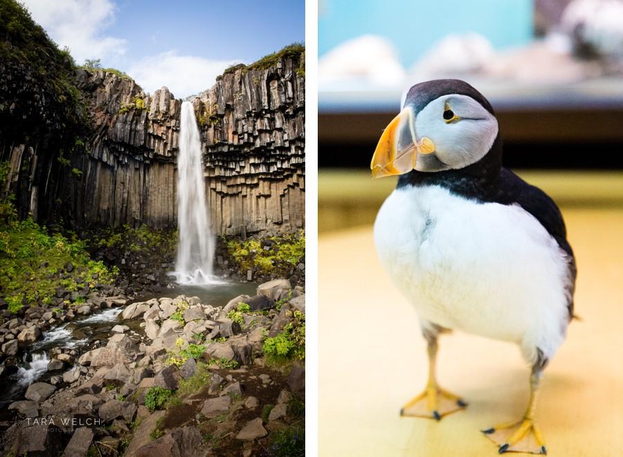 Iceland, Northern Lights, Aurora, Travel Photographers