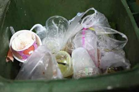 Silverfish Breeding In Garbage