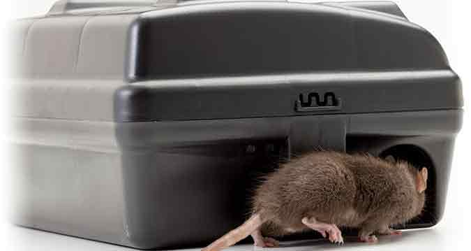 Rodent Bait Station With Rat