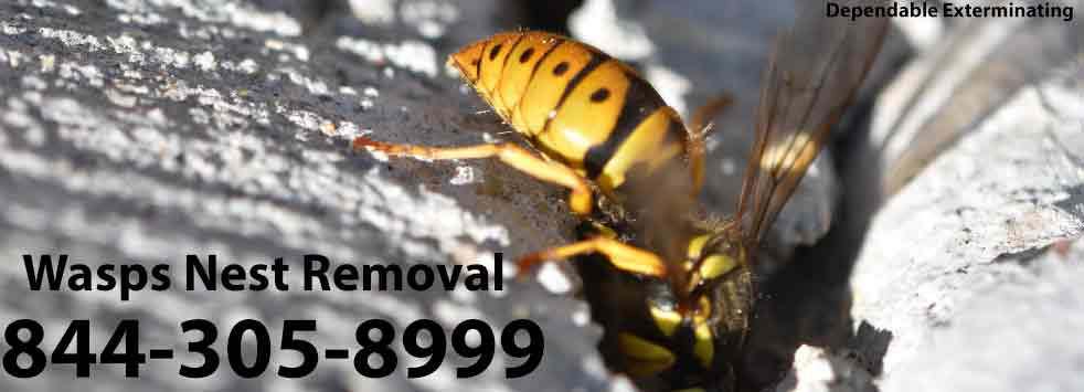 Wasps Nest Removal