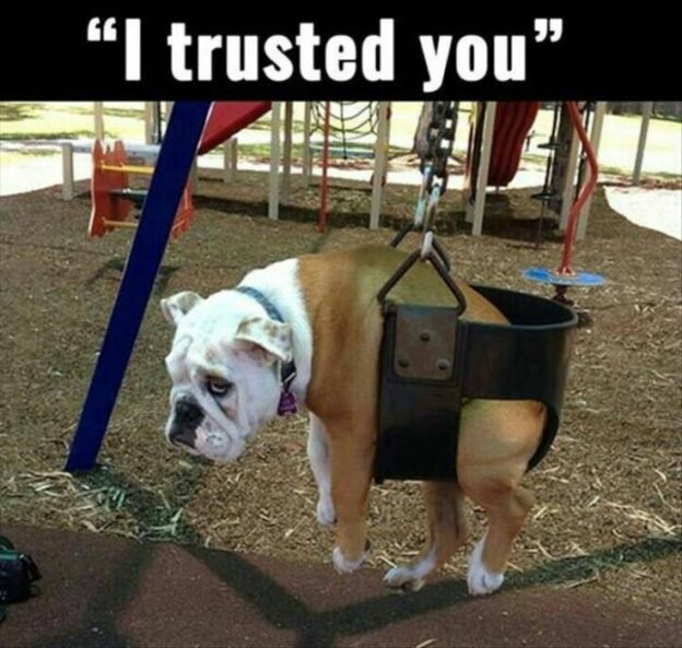 Who to trust, Bulldog trusted his owner, now the dog is in child swing