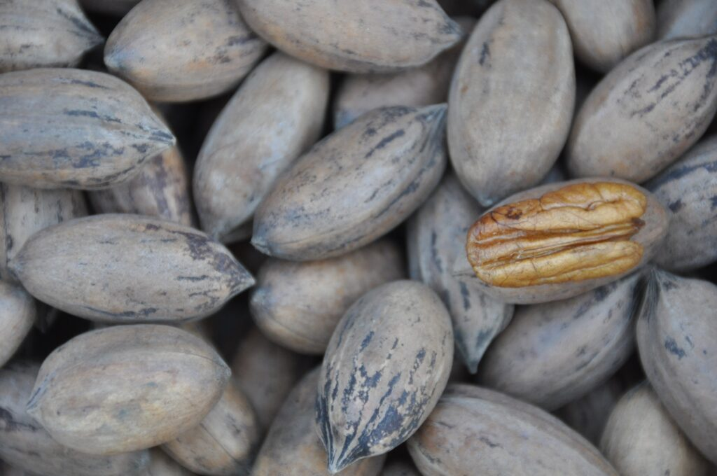 Zoomed in shot of pecans in shells