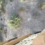birds eye view from a hot air balloon over a saguaro - arizona balloons inc