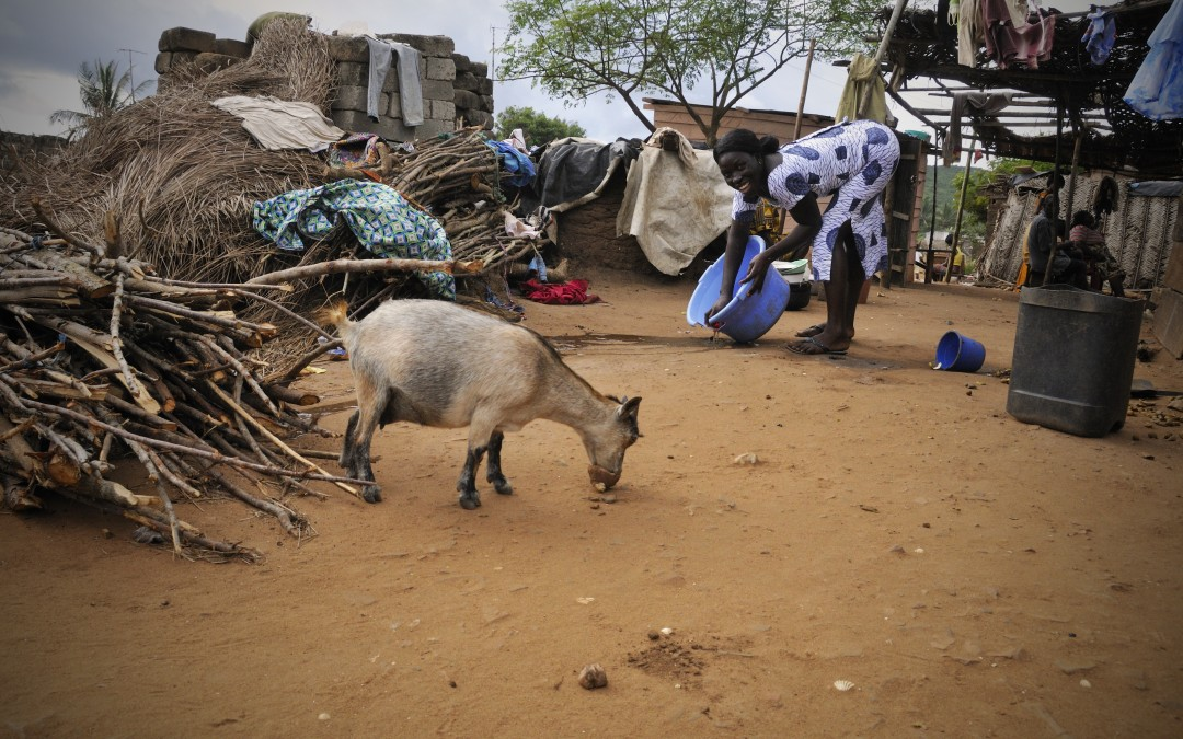 Kenya – Income Generating Goat Project