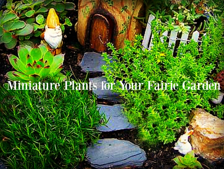 Miniature Plants for Fairy Gardens