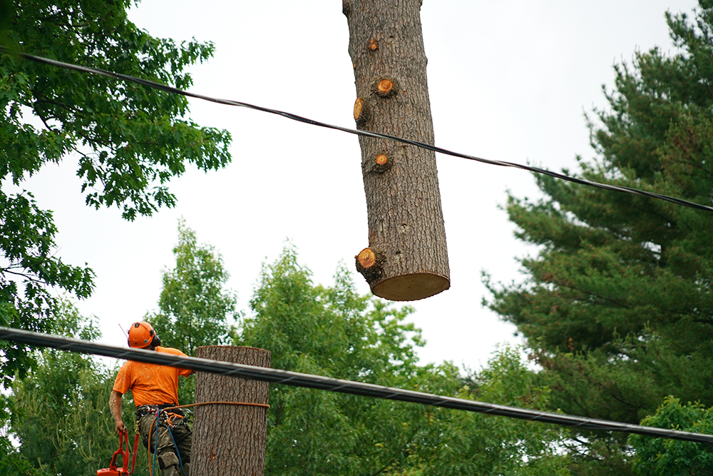 haverford township tree removal