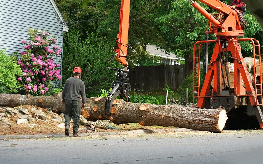radnor township tree removal