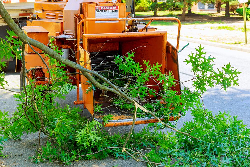 tree service radnor