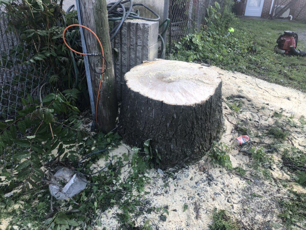 tree service wayne pa
