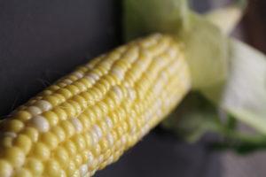 Fresh and Delicious Farmer's Pick Corn
