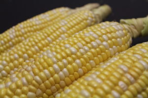 A selection of fresh Ontario corn from Farmer's Pick