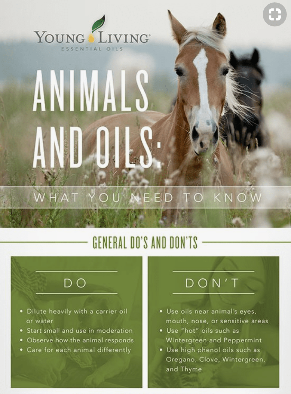 Oils for you and your Horses - My Equestrian Style