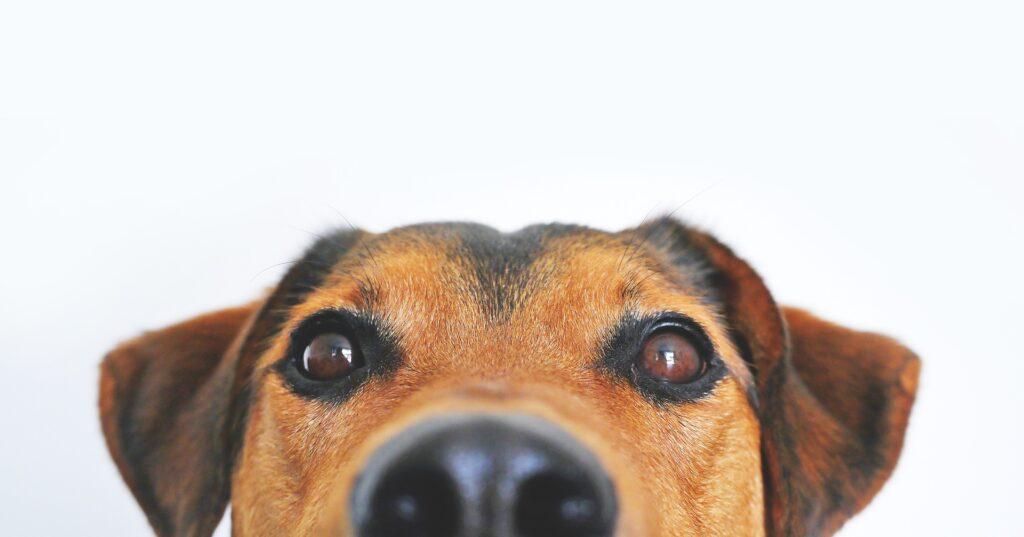 dog closeup