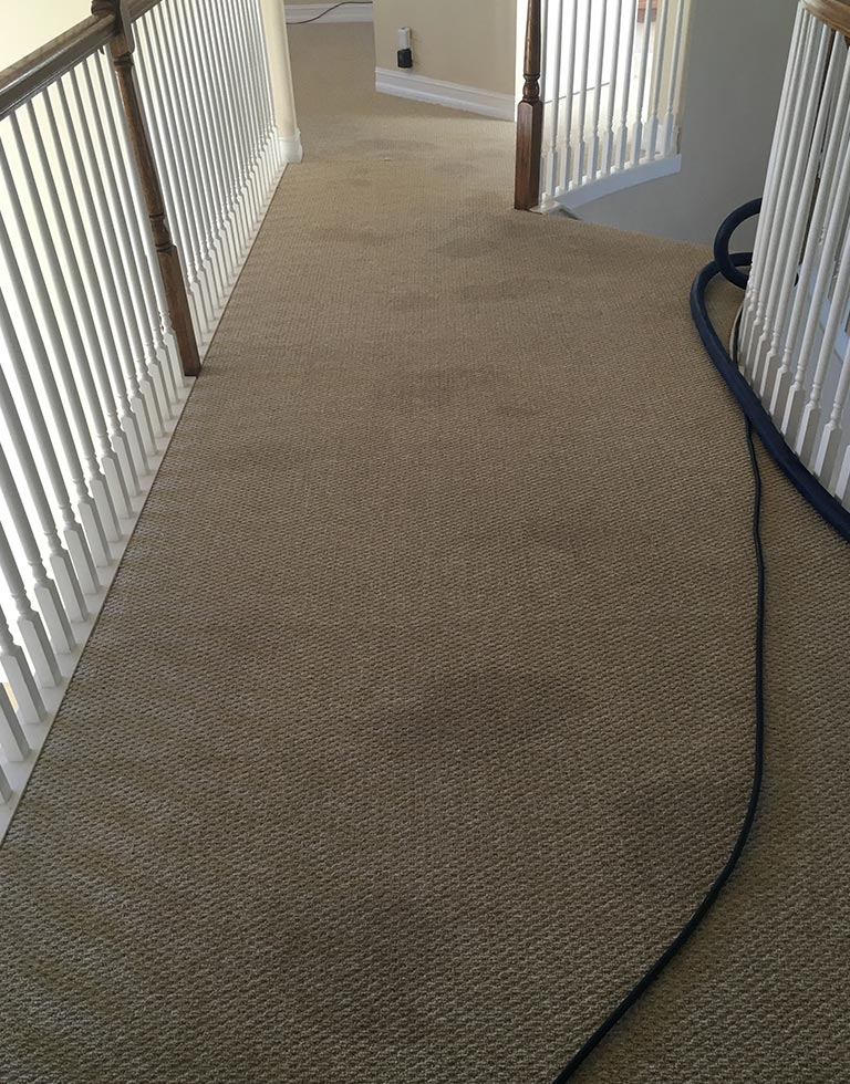 carpet cleaning service -Dieterscarpettilecleaning Gallery 2 Before