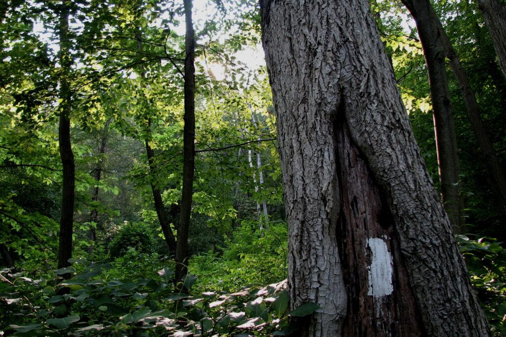 Appalachian Trail Thru-Hiker