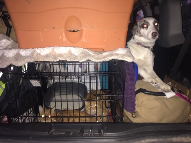 Moving cross country packed car with the pets