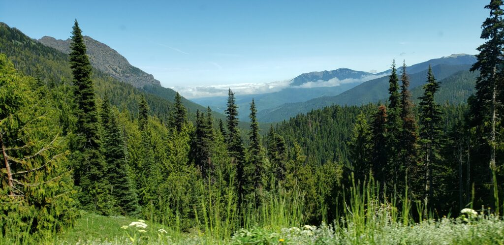 hurricane ridge in olympic national park, washington state - the view driving back down to the exit