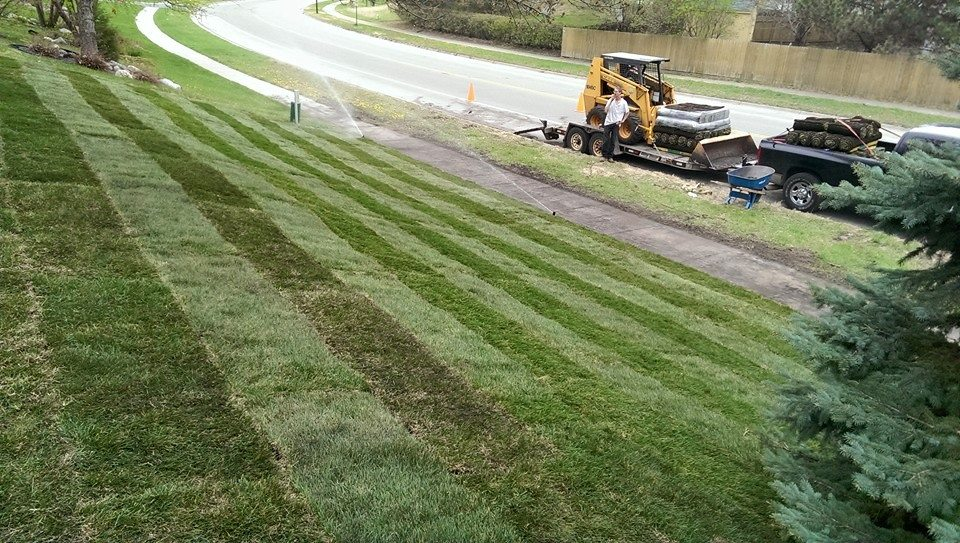 back yard lawn renovation with sod