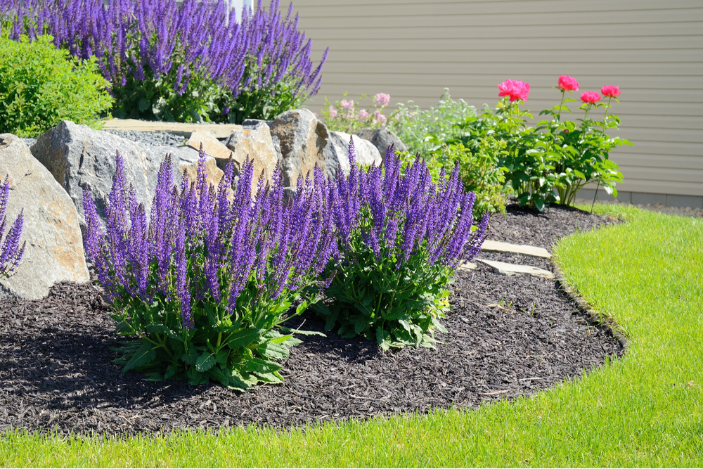 landscaping mulch shrubs edging
