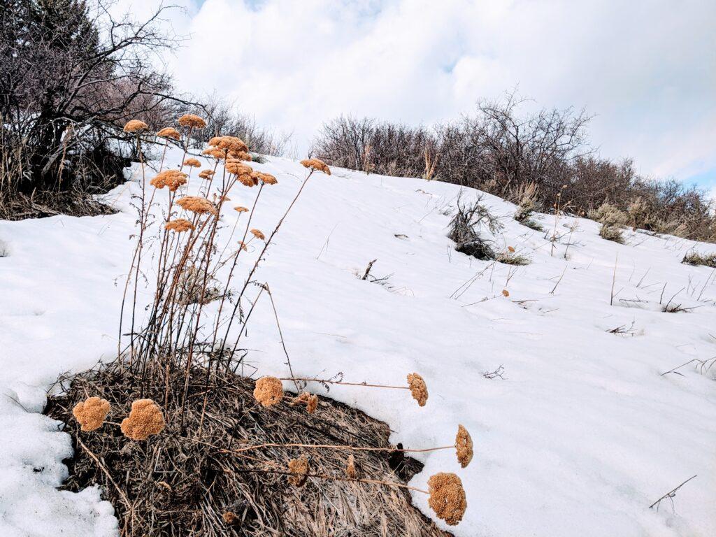 Flowers in snow