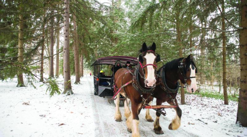 DASHING THROUGH THE SNOW…. Ohio Carriage and Sleigh Rides