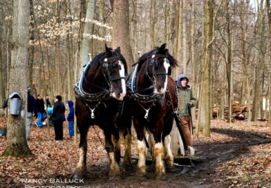 Maple Sugar Festival & Pancake Breakfast, a Northeast Ohio Tradition at Hale Farm & Village